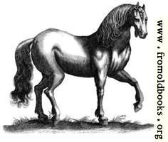 [picture: 135b.---Antique engraving of a horse]