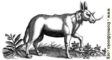 [picture: Monoceros (Unicorn) Engraving]