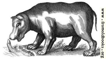 [picture: Another antique brass engraving of a Hippopotamus]