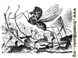 [picture: Rocking-Horse Fly]