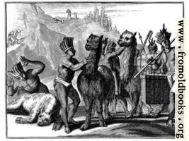 [picture: Llamas in Peru]