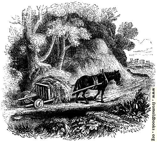[Picture: 74.—Welsh Agricultural Cart]