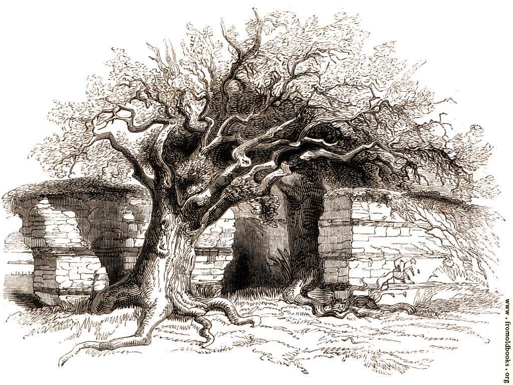 [Picture: 124.—Silchester.  The North Wall.]