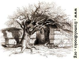 [picture: 124.---Silchester.  The North Wall.]