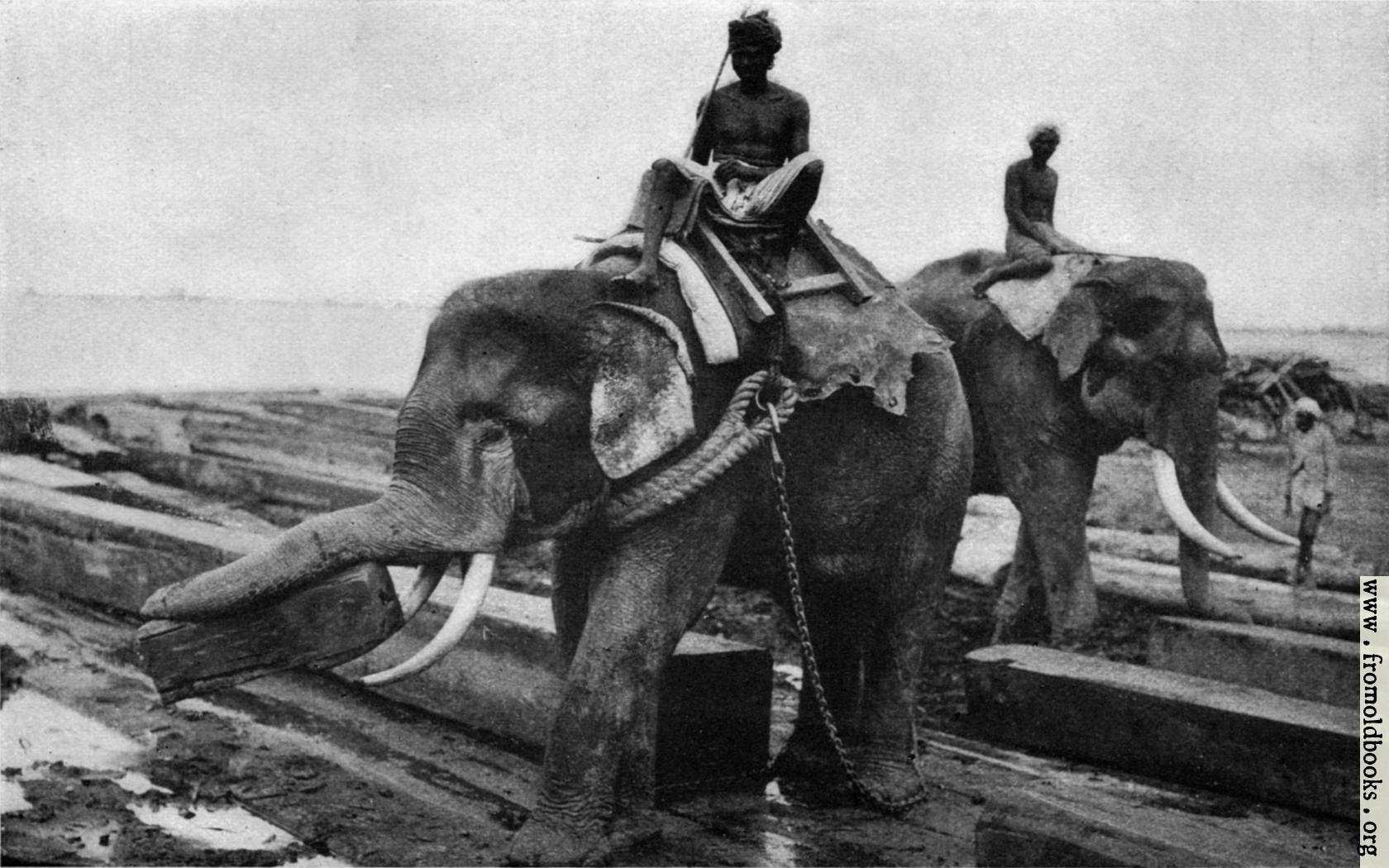 how to get war elephants in ck2