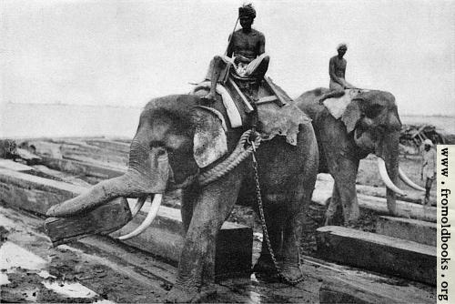 [Picture: Elephants cayying logs at Rangoon]