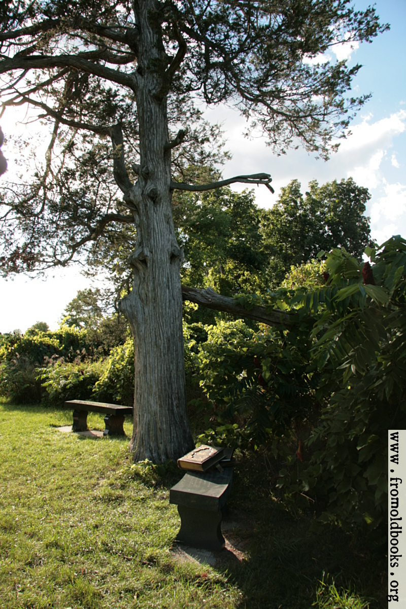 [Picture: Tree with benches and book]