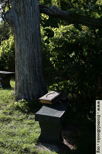 [Picture: Tree with benches and Bible]