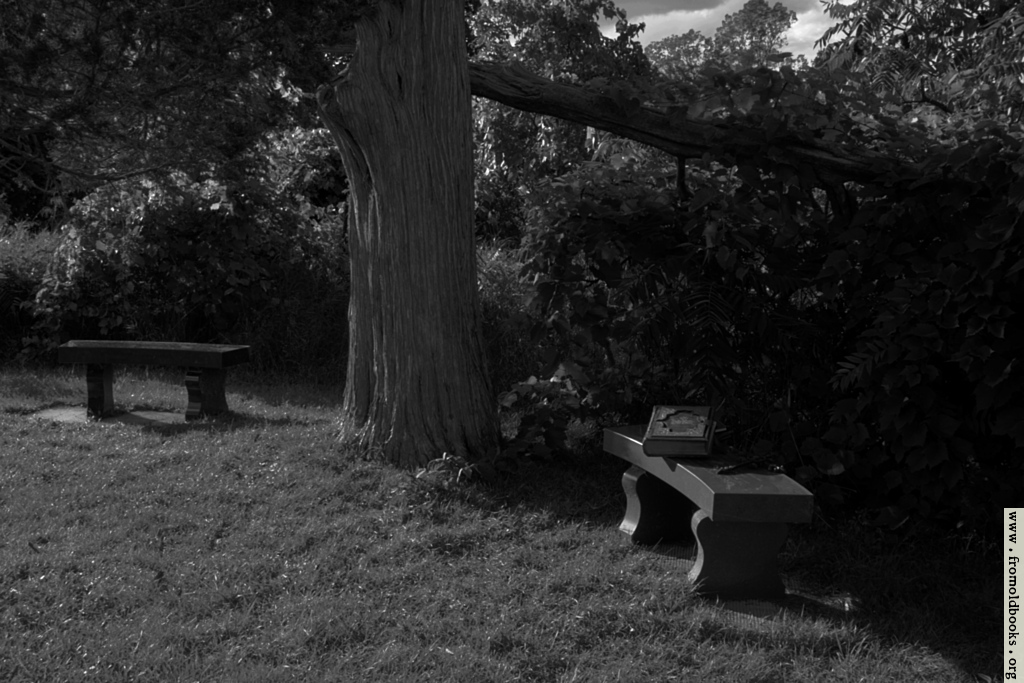 [Picture: Two benches under an old tree with a Bible (black and white)]