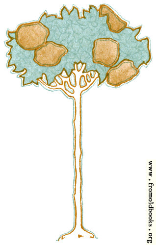 [Picture: Tree]