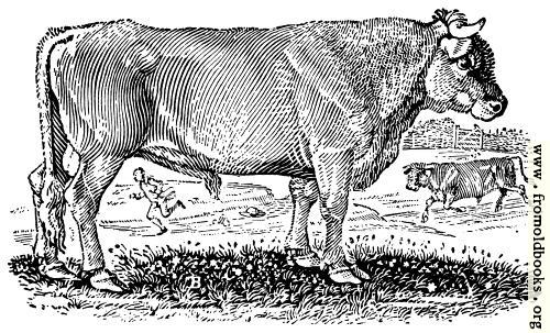 [Picture: The Bull]