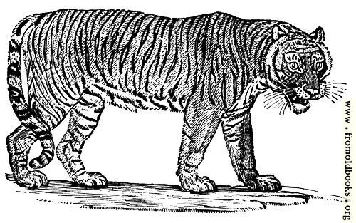 [Picture: The Tiger]