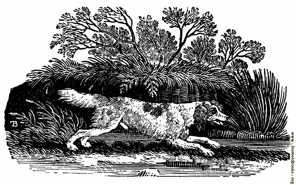 [Picture: The Springer, or Cocker]