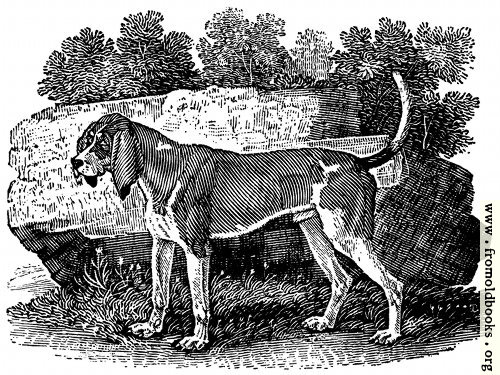 [Picture: The Old English Hound]