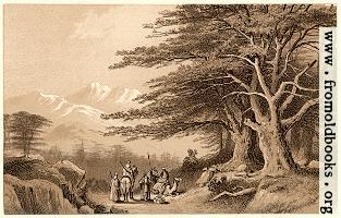 [picture: Cedars of Lebanon]