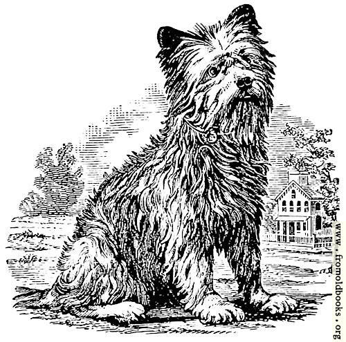 [Picture: Terrier woodcut]