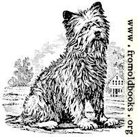 [picture: stock block: Terrier woodcut]