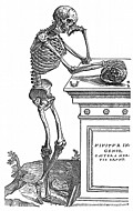 [Picture: 164. Skeleton with Skull]