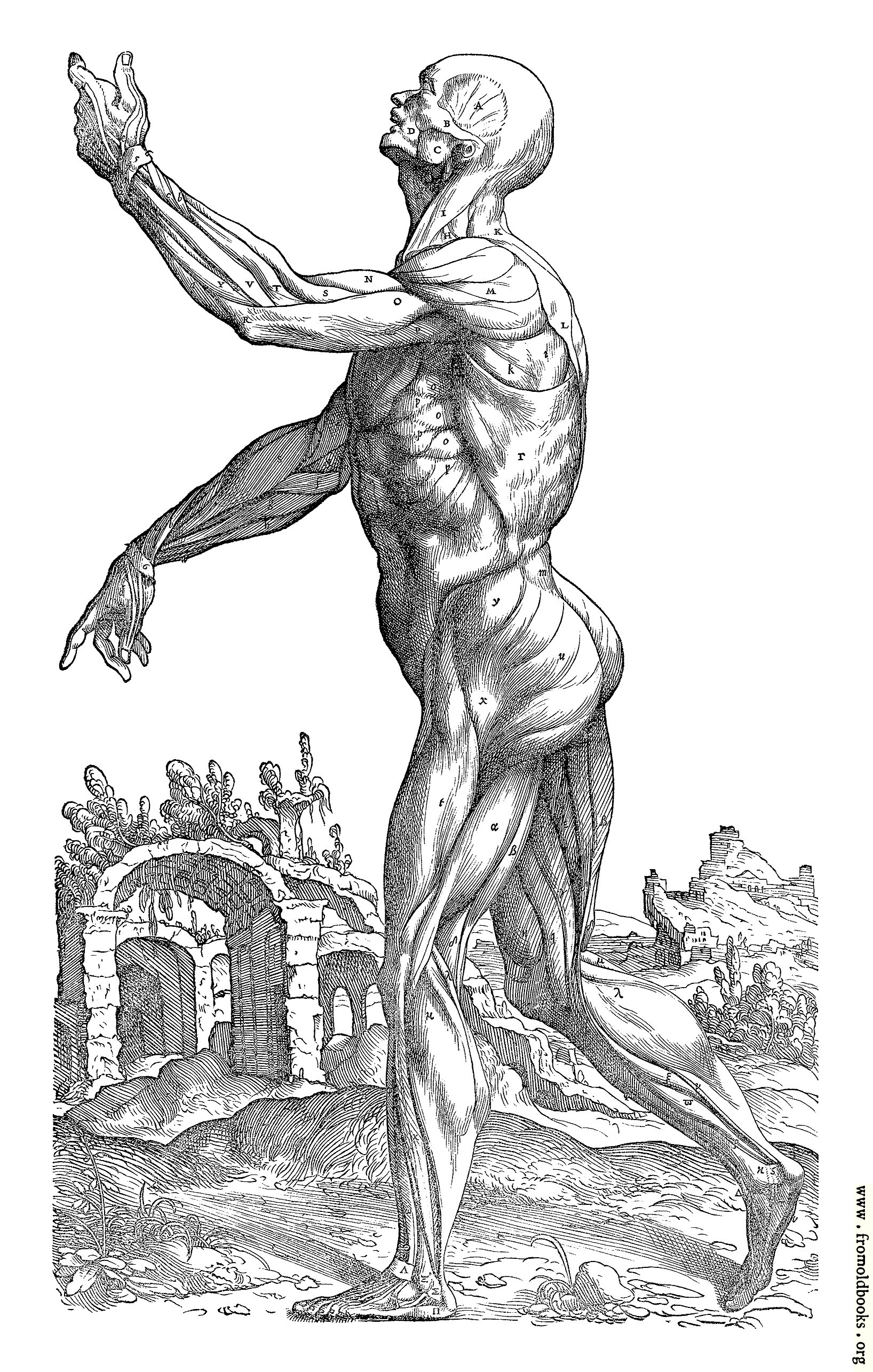 [Picture: 174. Muscle Men, Table II]