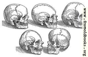 [picture: 18. Five Skulls]