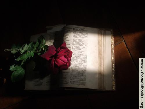 [Picture: 1581 Psalter with Rose]